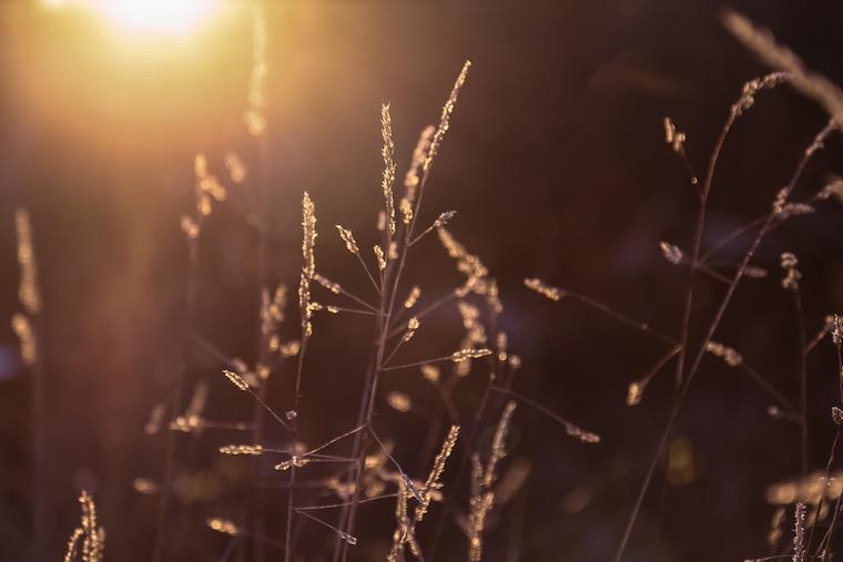 Foap-Capture_light_@CABDAY_Susanne.Alfredsson