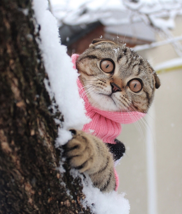 Foap-Cat_in_winter