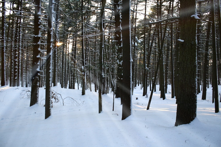 Foap-Walking_in_a_Winter_Wonderland