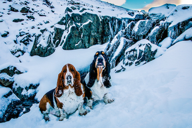 Foap-Winter_wonderland_