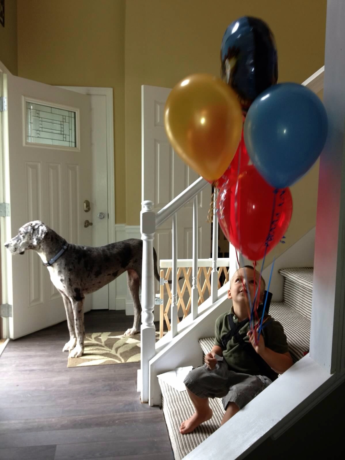 Foap-Boy__dog__and_balloons_