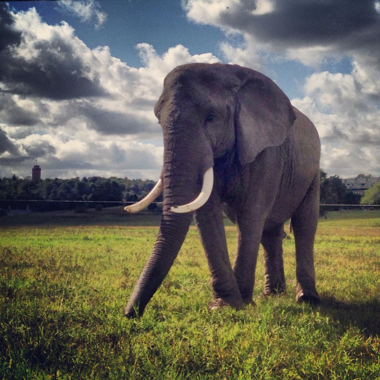 Foap-Elephant