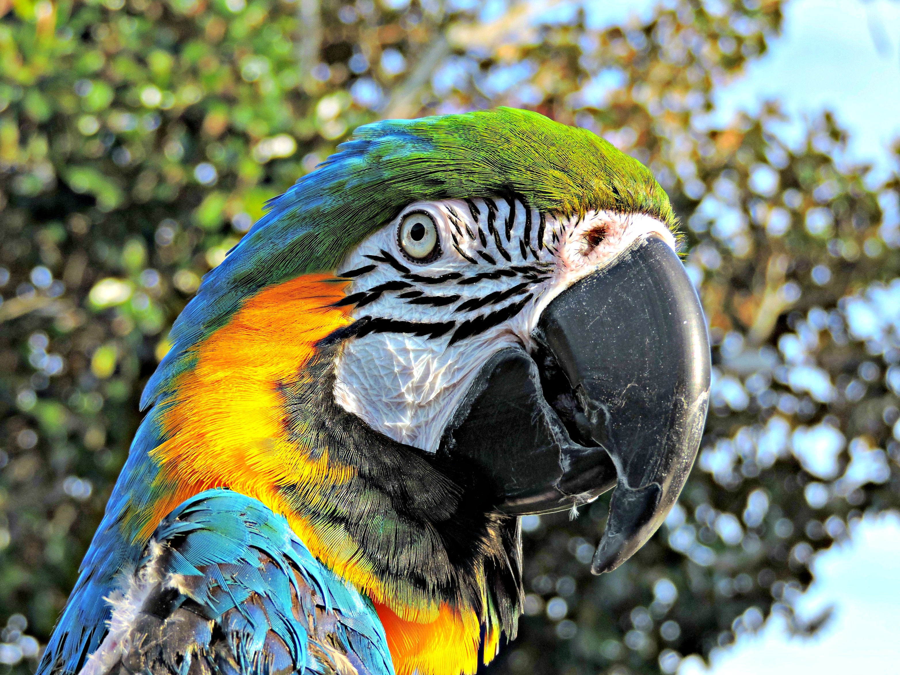 Foap-Macaw_in_the_sun