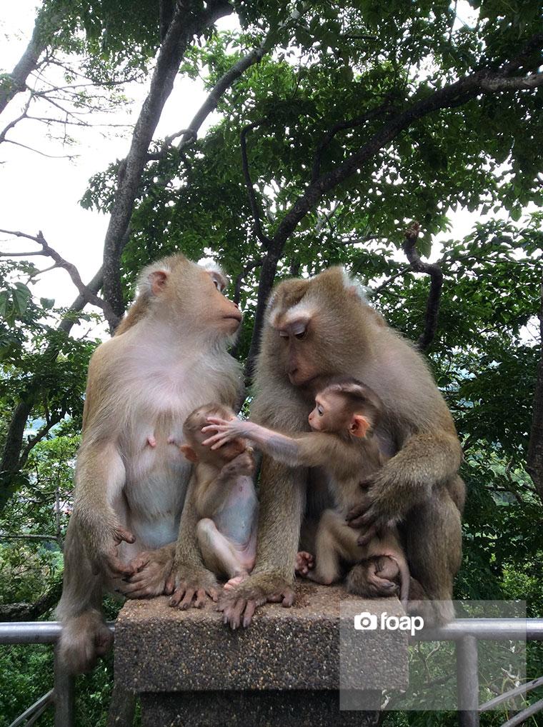 Foap-Monkey_