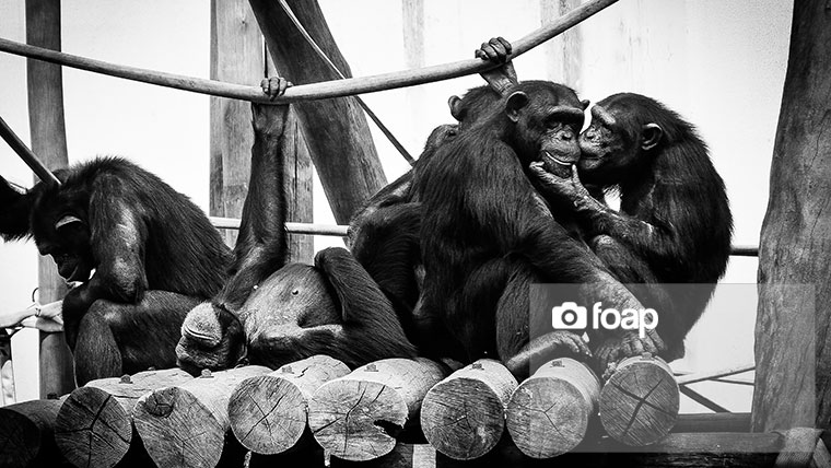 Foap-Monkey_Family-2