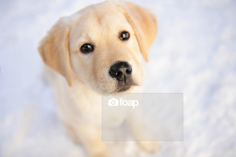 Foap-Puppy watermark