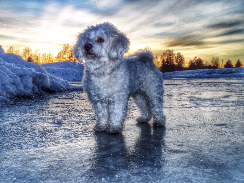 Foap-Puppy_In_Winter_Sunset