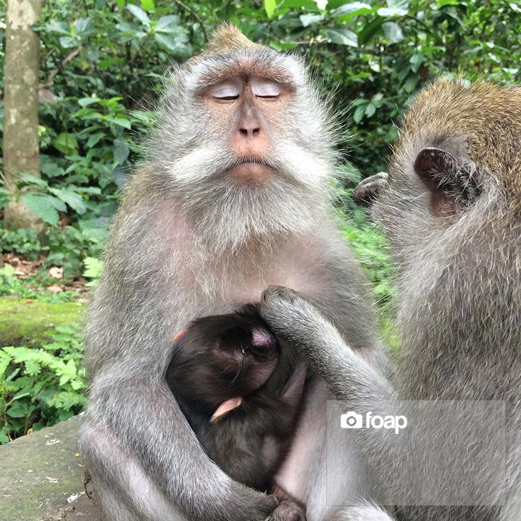 Foap-Zen_Monkey-2