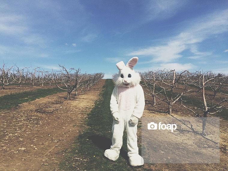 Foap-Bunny_w