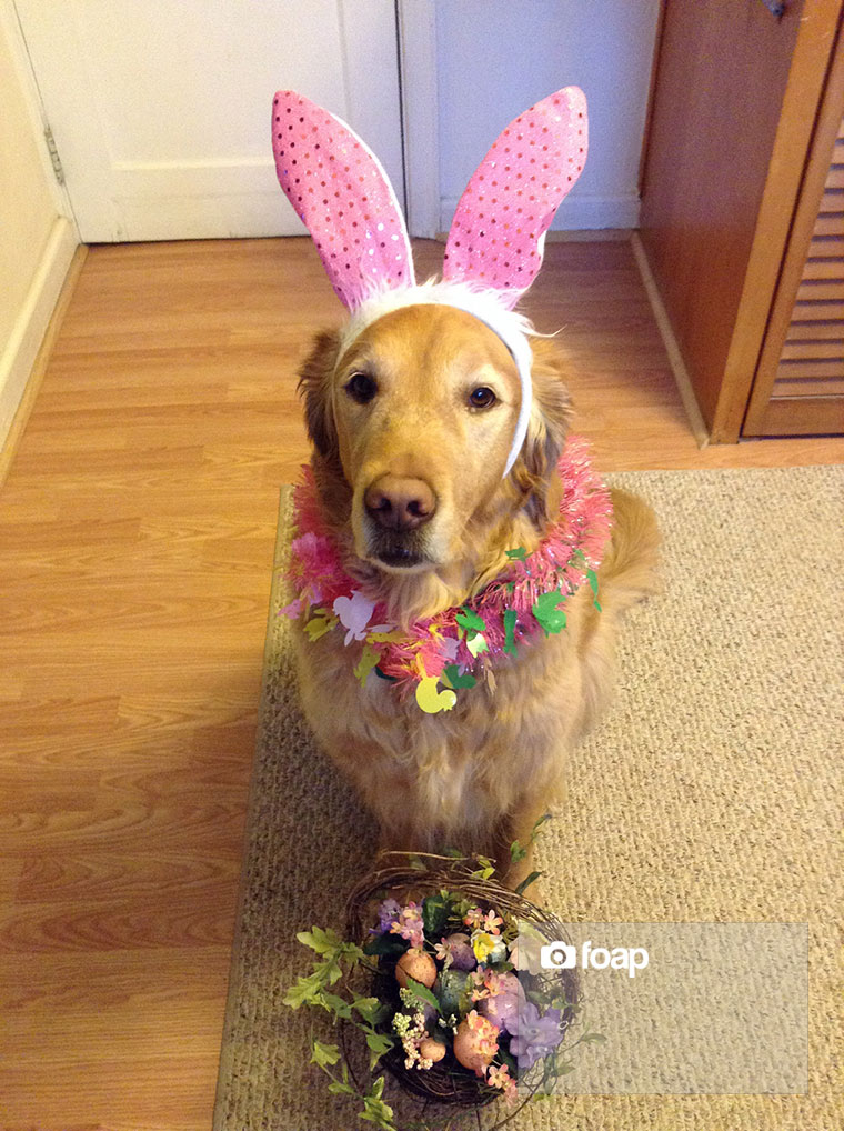 Foap-Pumpkin_the_Easter_Golden_Bunny_w