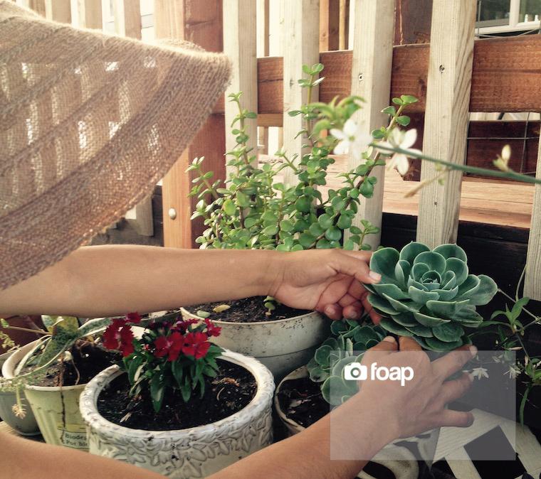 Foap-Garden copy