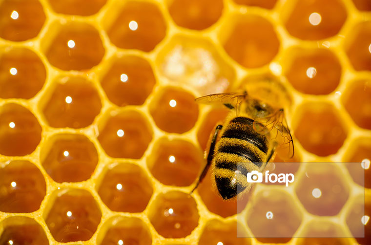 Foap-Honeycomb_with_bee