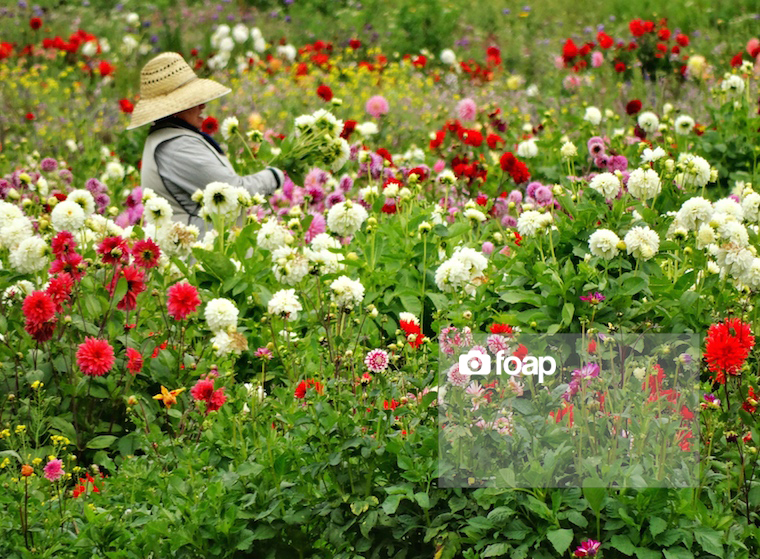Foap-Old_Woman_Picking_Colorful_Flowers copy