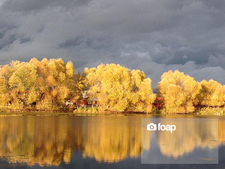 Foap-On_Golden_Pond