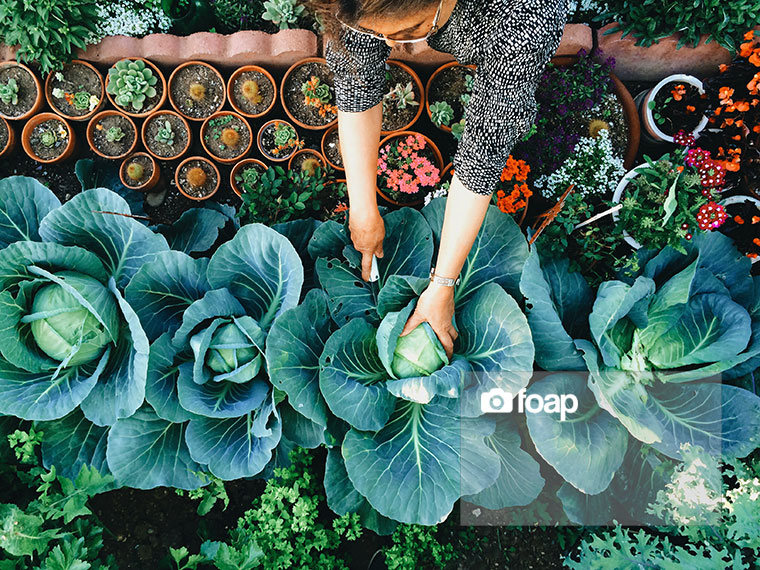 Foap-Woman_tending_to_her_vegetable_garden__