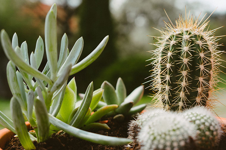 Foap-cactus_and_suculent_garden
