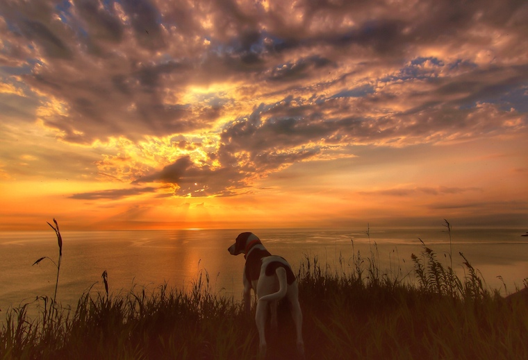 Foap-Coonhound_Sunrise_