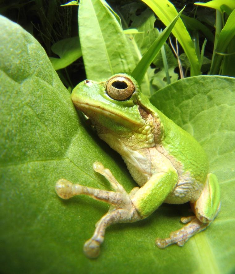 Foap-Frog_03