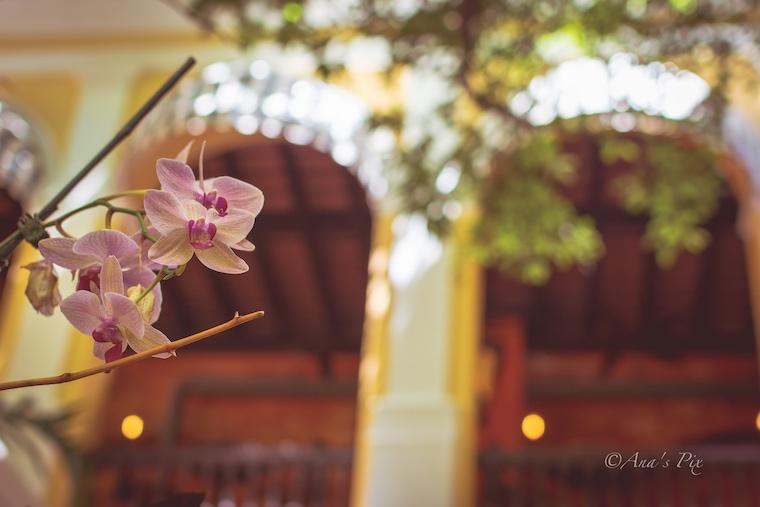 Foap-Orchids