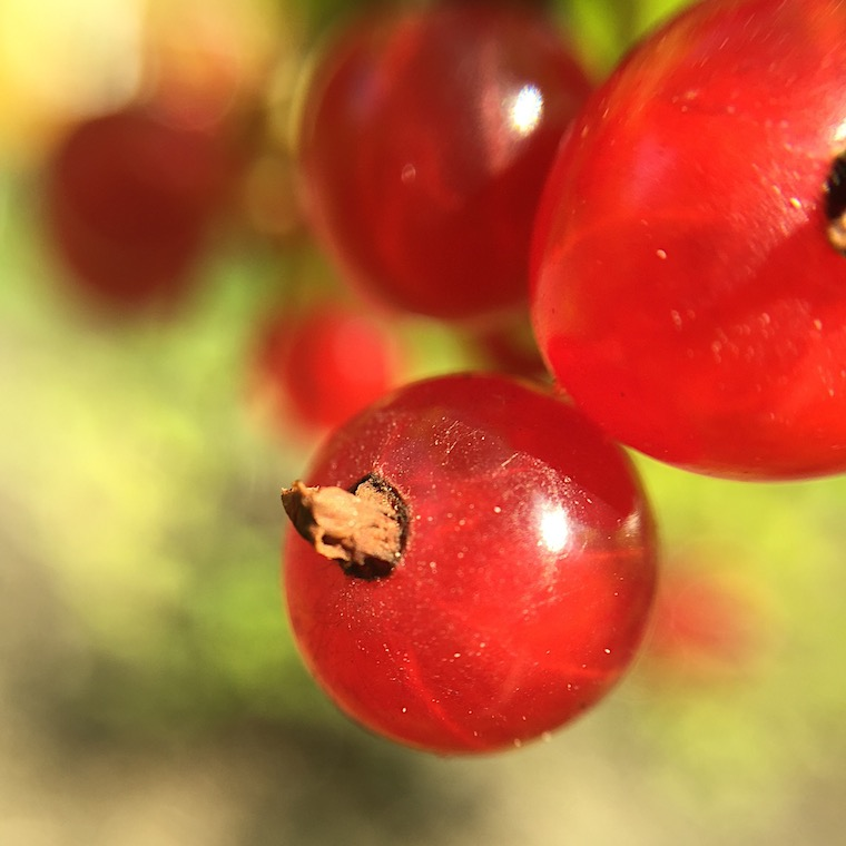 Foap-Red_currants-2