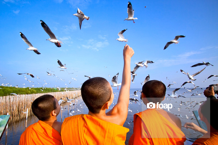 Foap-monk_feeds_seagulls_Thailand copy