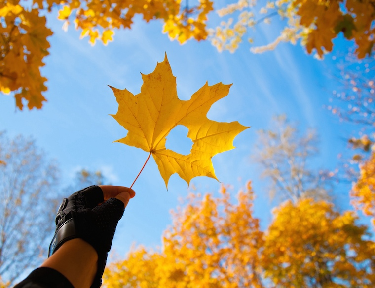 Foap-from_autumn_with_love_autumn_forest_sky_golden_warm