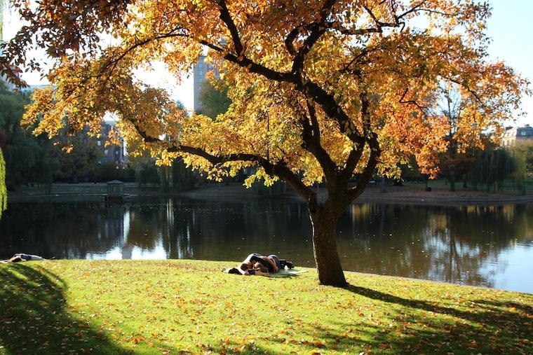 Fall Sleeping under tree