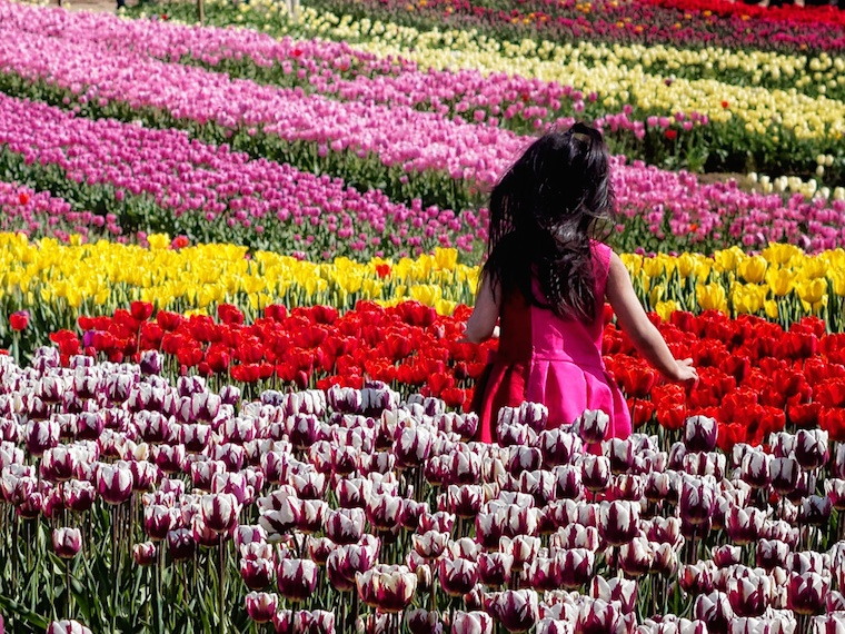 Tiptoe through the tulips. Child having fun on a beautiful spring day!
