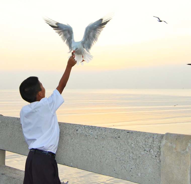 boy feeding seagull