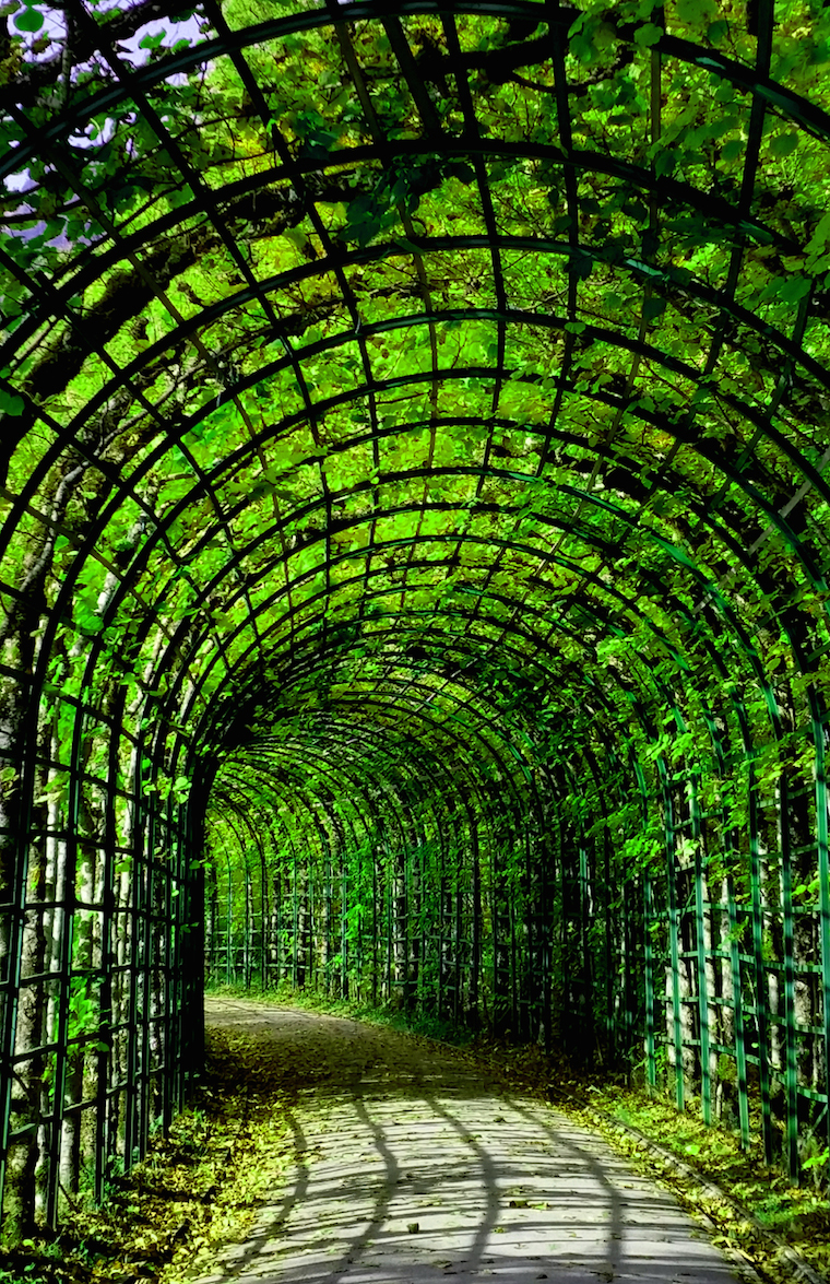 Green Tunnel Foap