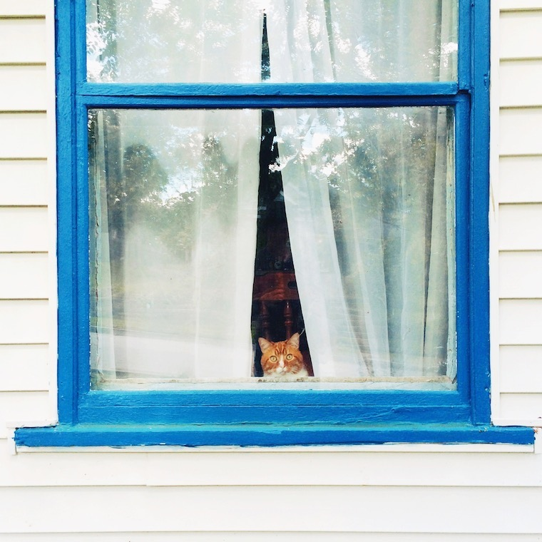 Foap-Cat_in_the_window