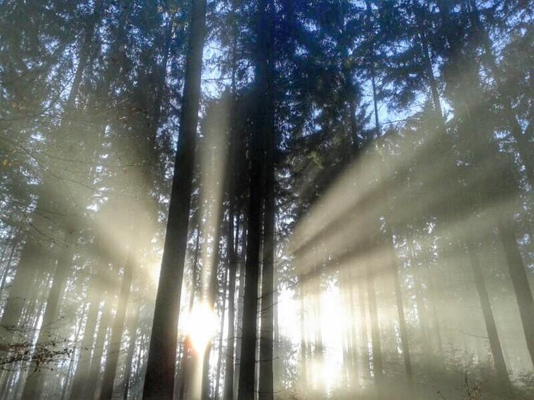 Foap- Forest