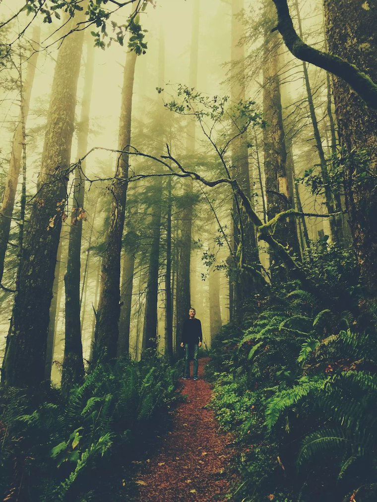 Foap Magical Forests 6