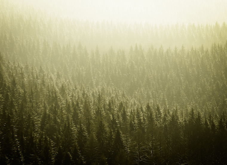 Foap Magical Forests 9