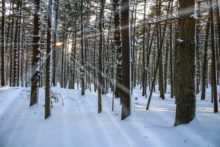 Foap-Wintery_forest_scene