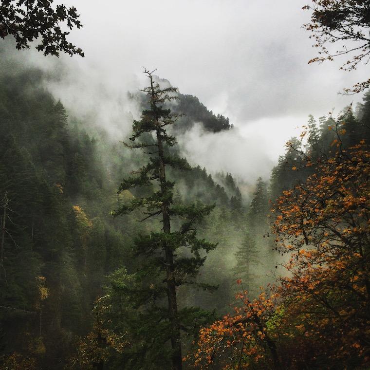 Foap-Magical_Oregon_forest_