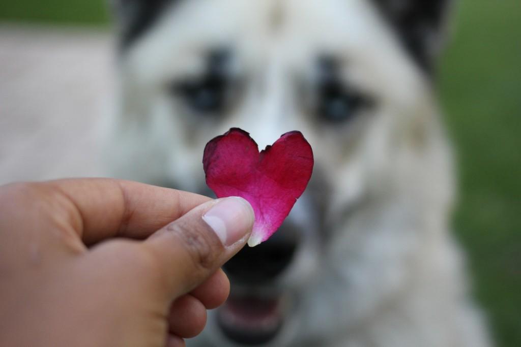 Foap-Love_